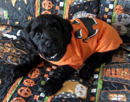 Halloween dogweb